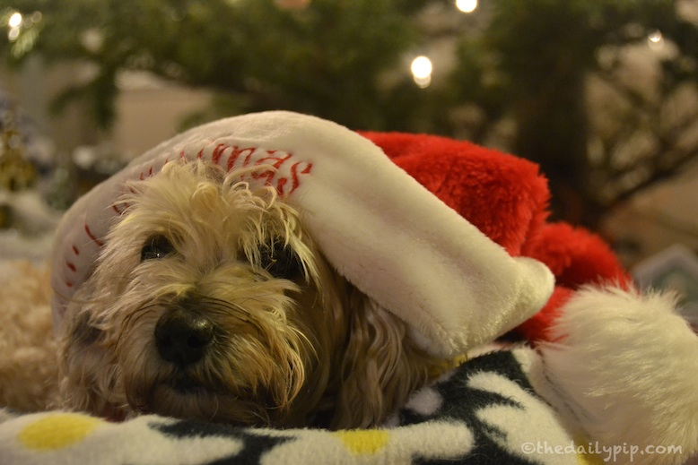 Ruby celebrates the holidays with Whimzees Natural Dog Treats