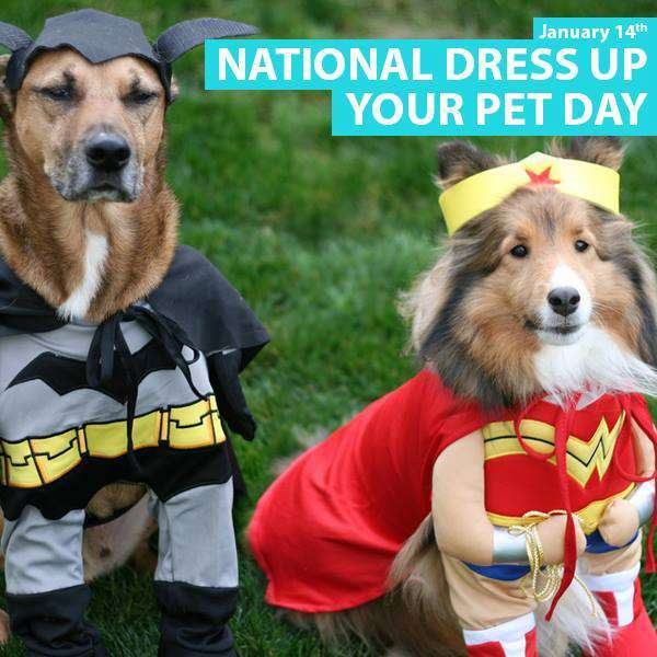 National Dress Up Your Pet Day Wishes Images download