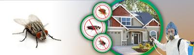 شركة مكافحة حشرات بالمدينة المنورة ورش مبيدات بالمدينة