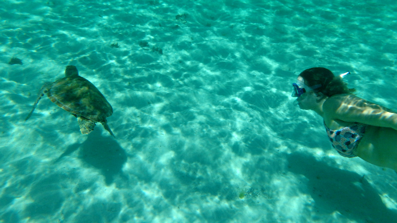 Swimming with turtles in The Caribbean