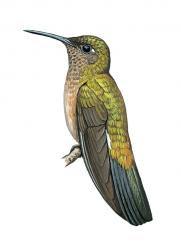 endemic brazil birds