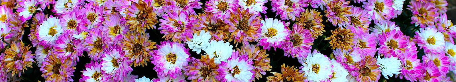 Поход начался с цветов