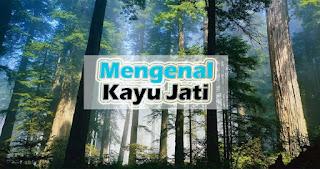 Mengenal Kayu Jati