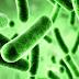 Manfaat Bakteri Baik di Dalam Tubuh