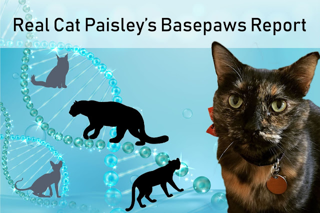 Basepaws results