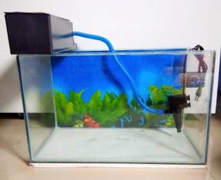 Cara memasang filter aquarium untuk labi-labi