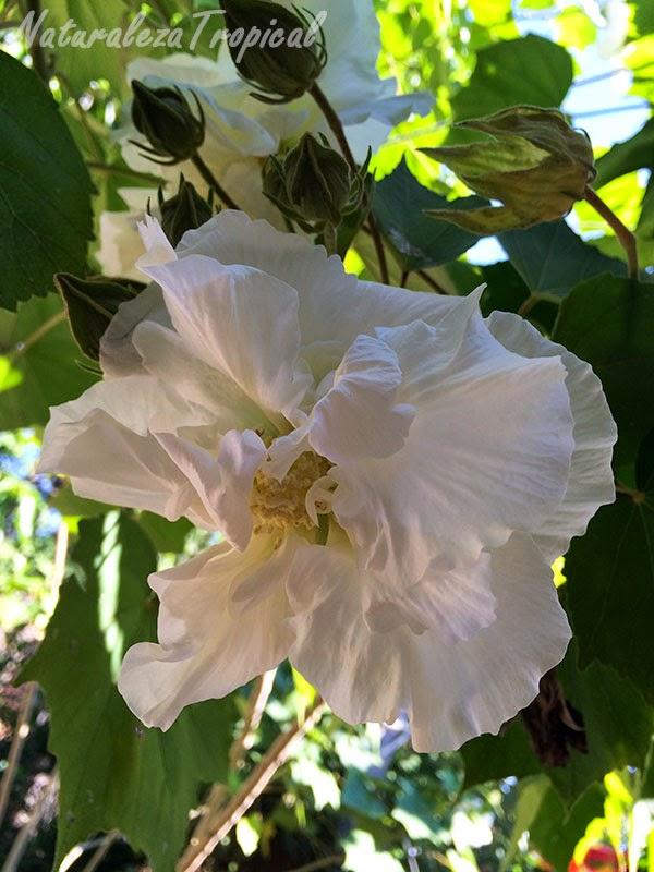 Flor Rosa de mayo en horas de la mañana