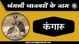 kangaroo animal name in hindi