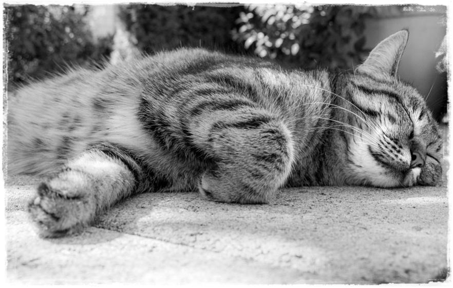 17 Ciri-Ciri Kucing Mau Mati, Berikut Tanda nya