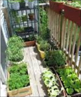 Back Porch Gardening Help At Penn State Extension This Saturday