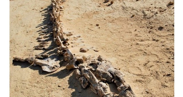 Discovery of Mammals in Egypt