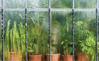 kondenzacija sobne biljke