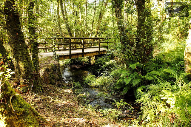 Bosque Aldán