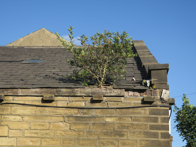 Small tree growing on roof of neglected building