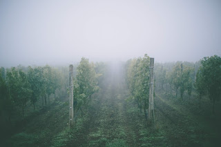 Effect of climate change on European vineyards