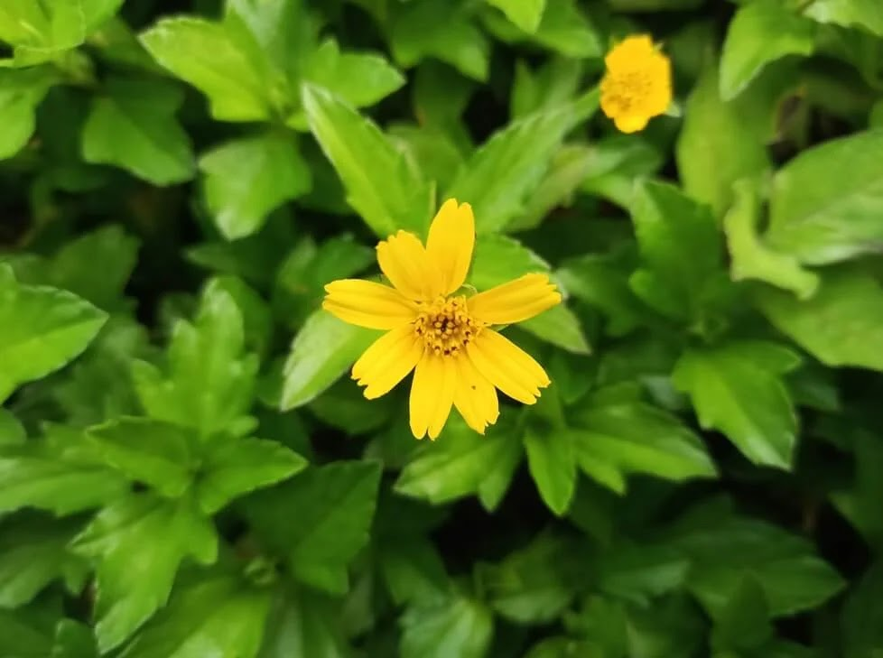Infinix Note 10 Pro Camera Sample - Flower, Closeup