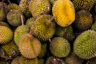 Durian - www.smhealthylife.com