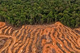 Hilangnya Hutan di Indonesia