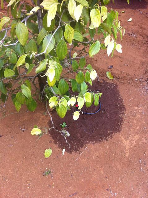 tưới tự động cho cây nông nghiệp