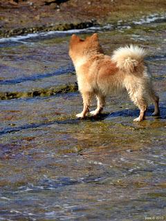 ocean puppy