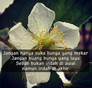 Quote Bunga Layu
