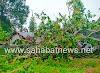 Angin Kencang Merata Di Pinrang Pohon Tumbang Timpa Rumah Warga Dan Tiang Listrik Roboh