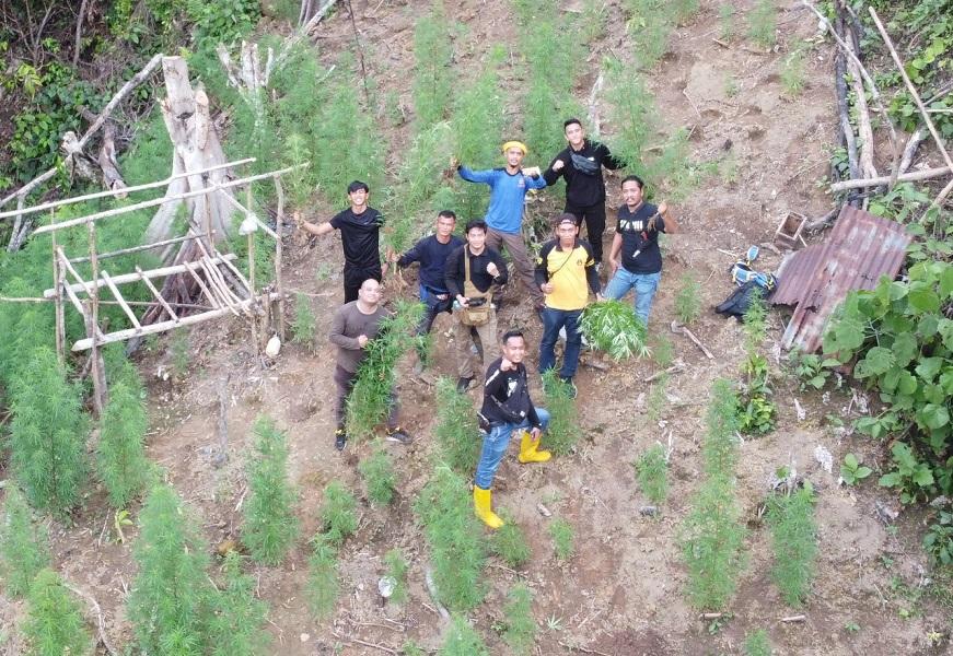 Polisi Temukan Ladang Ganja Seluas Satu Hektare di Muratara