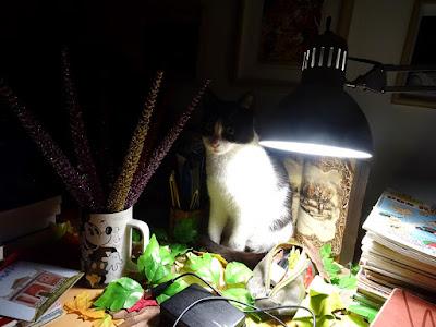 Ο Μπούμπης, ένας γάτος υπό το φως της νυχτερινής λάμπας