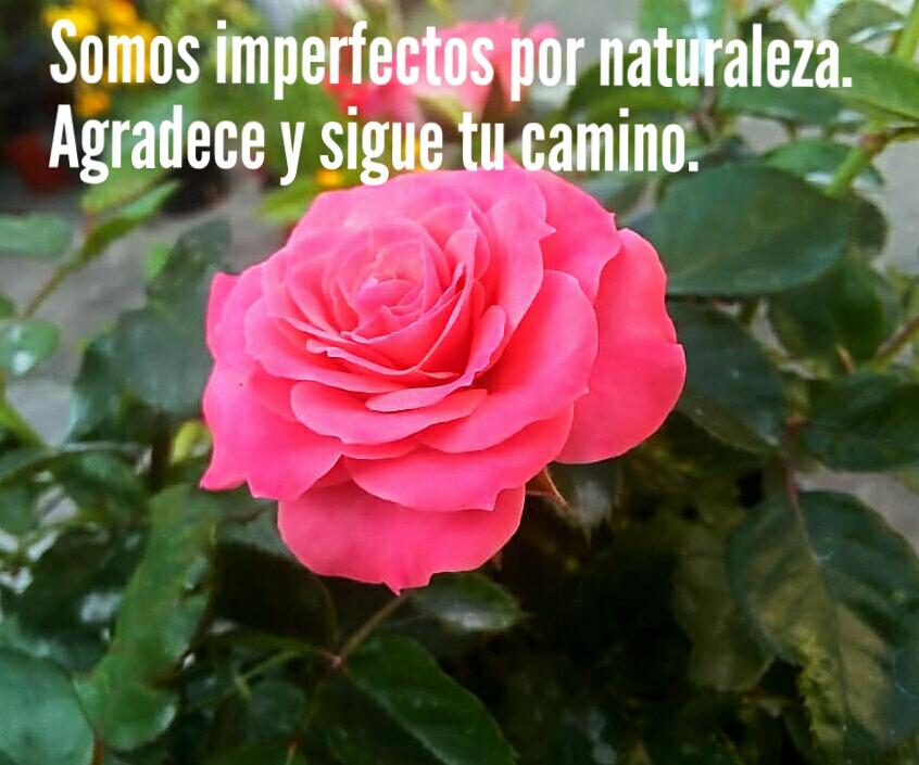 10 Frases Matonas Del Dr César Lozano