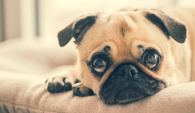 10 signs you should not get a dog