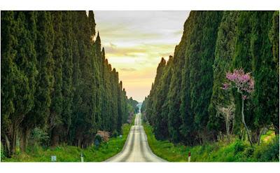 vialone dei cipressi da San Guido a Bolgheri