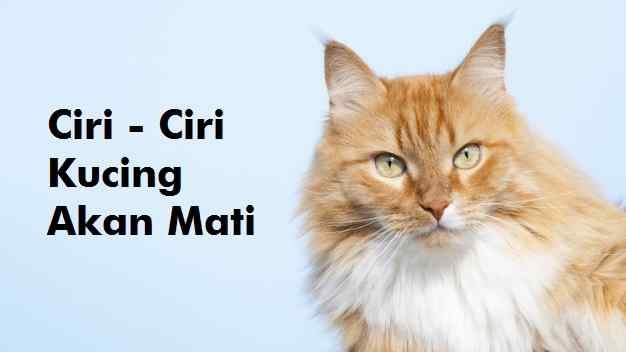 25+ Ciri-Ciri Kucing Akan Mati Yang Harus Diketahui