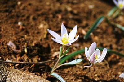 月明洞,白花