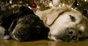 unique dog names, Lazy dog images download