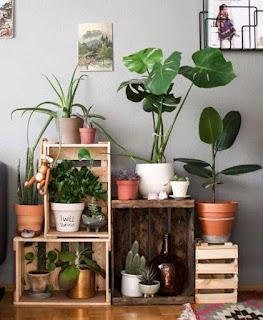 rincon para plantas  con cajones de madera reciclados