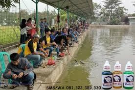 Essen Khusus Ikan Nila Harian