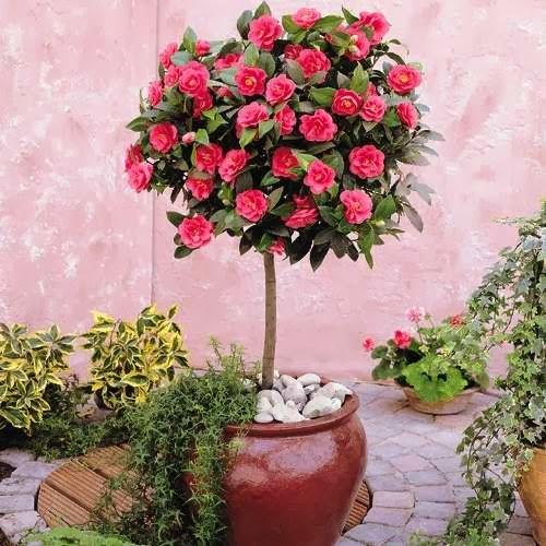 Arbustos Medianos Coleccion De Hojas Y Flores - Arbustos-de-flor