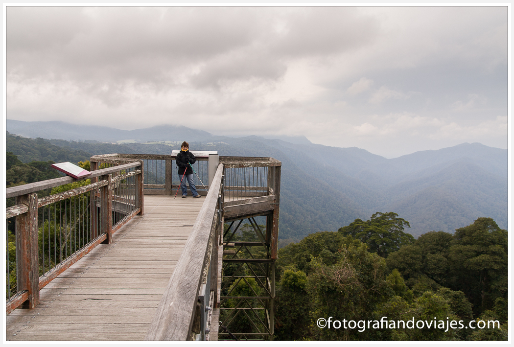 Skywalk mirador, Dorrigo Australia