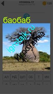 в поле растет одинокий баобаб 17 уровень 400 плюс слов 2