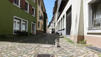 Zutrauliche Katze in der Altstadt von Bad Säckingen