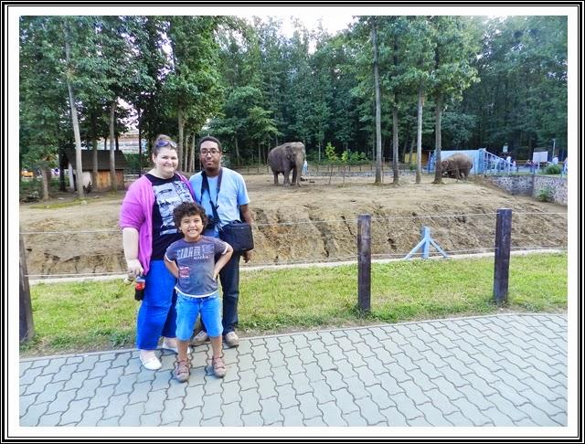 zoo-Nyiregyhaza-elefanti