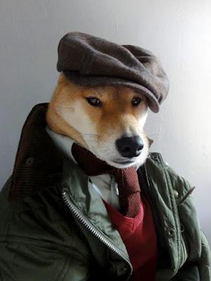 Foto di un cane elegante travestito