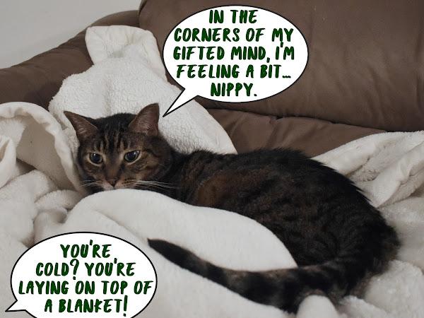 CRAAAAAY-ZEE for catnip!