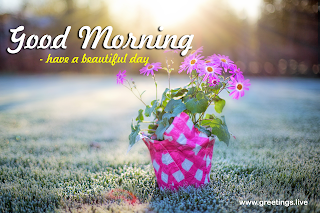 Pink Color flowers Good Morning wishes