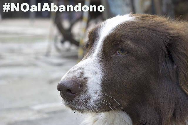 En verano más que nunca: No al abandono animal