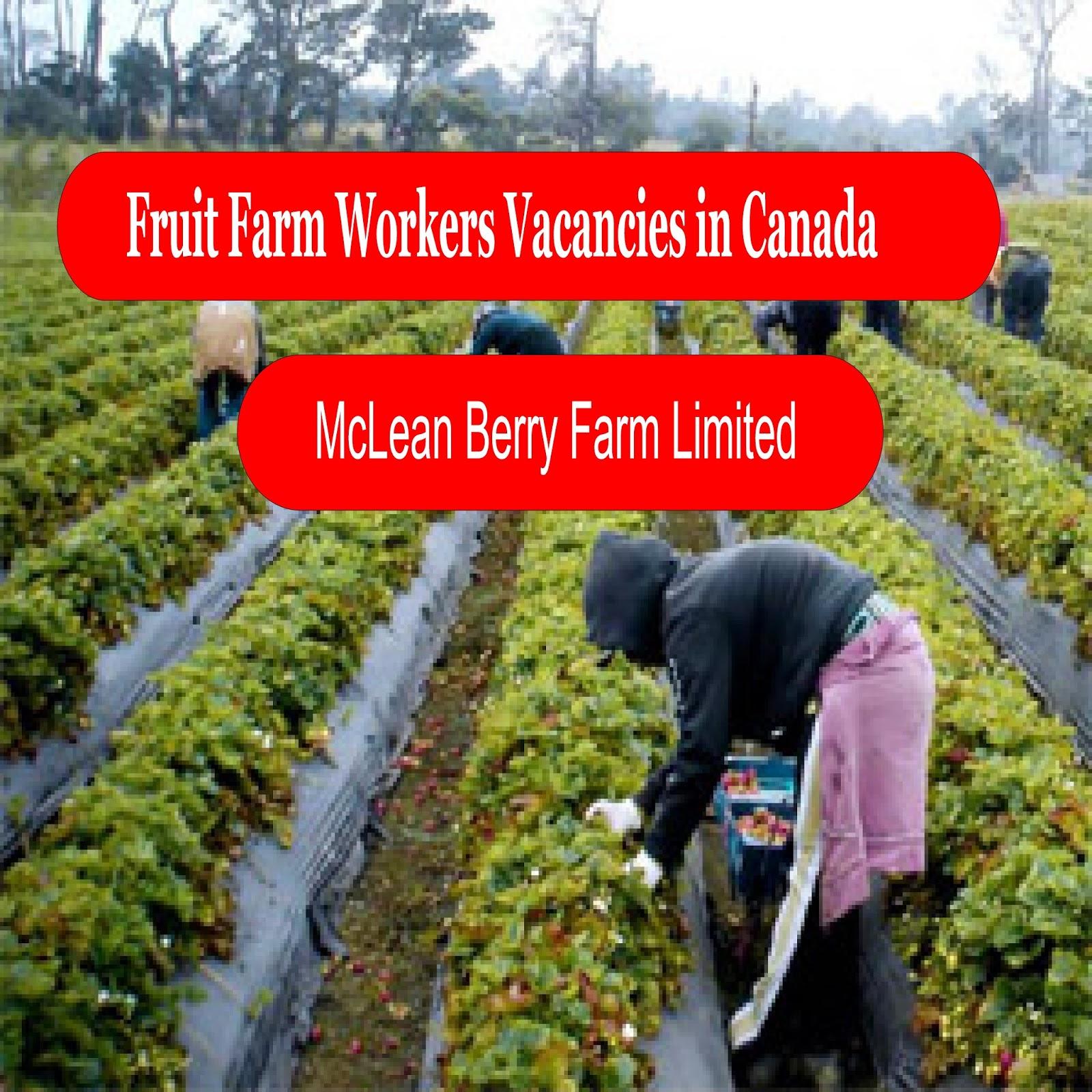 Canada fruit farm