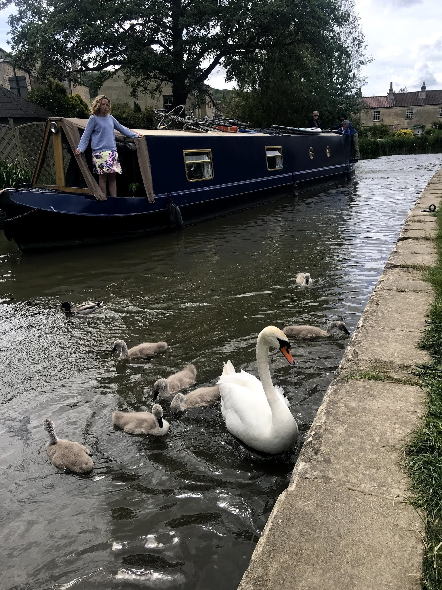 Swan on water with boat - Day trip to Bathampton