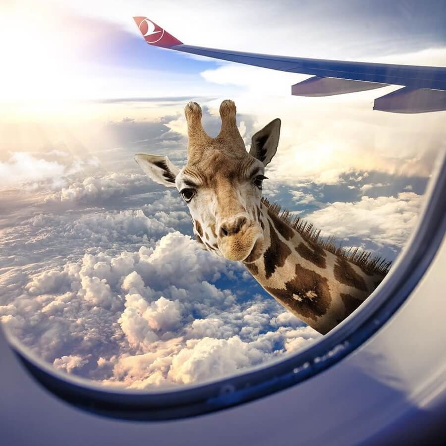 11-The-flying-giraffe-Yasin-Yaman-www-designstack-co