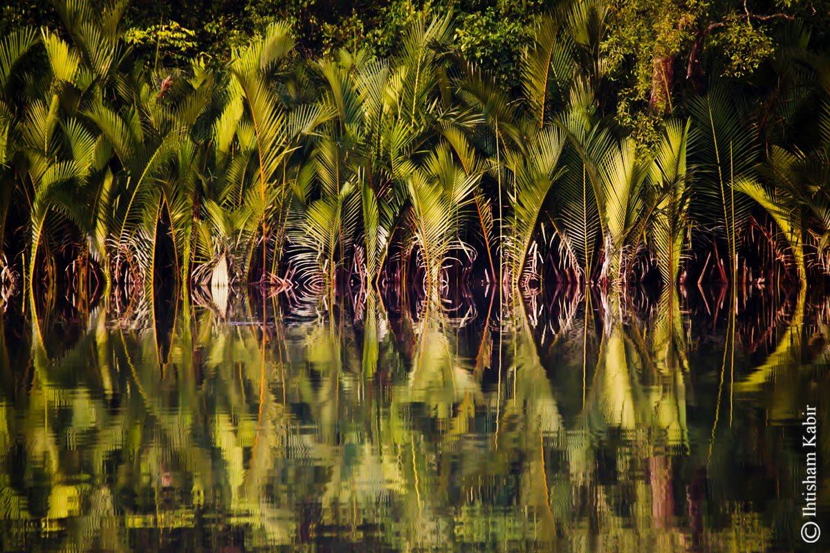 Sundarban Natural Beauty Of Bangladesh