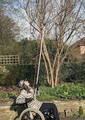 Long reach pruners